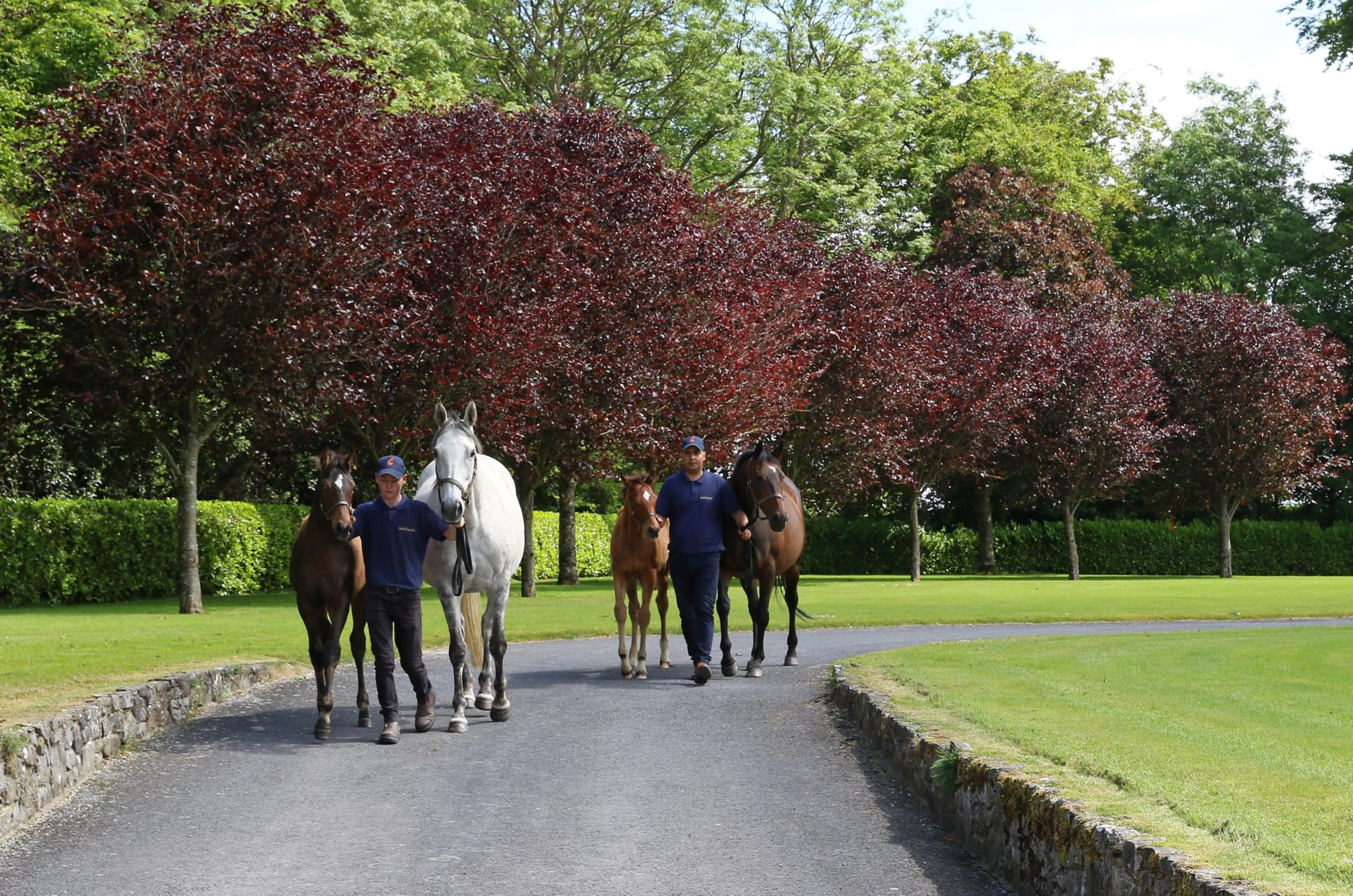Marlhill House Stud Launches New Website